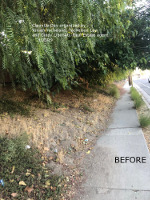 foliage blocking sidewalk